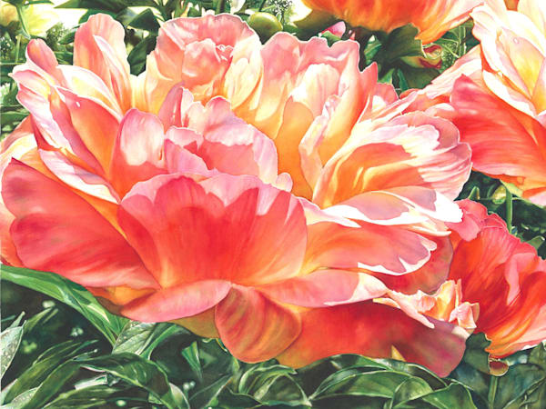 First Light Peony Watercolor Painting