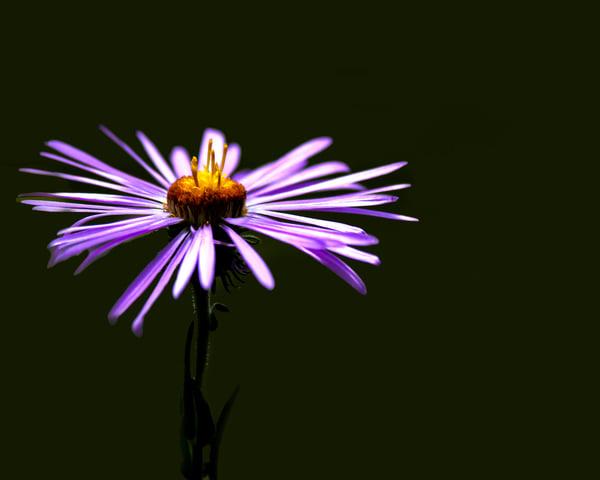 Purple Bee Magic Photography Art | Jim Livingston Art