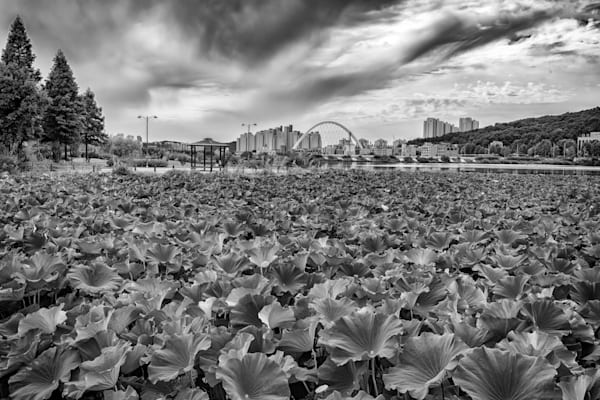 Cheonhoji Pond in Black and White | Shop Photography by Rick Berk