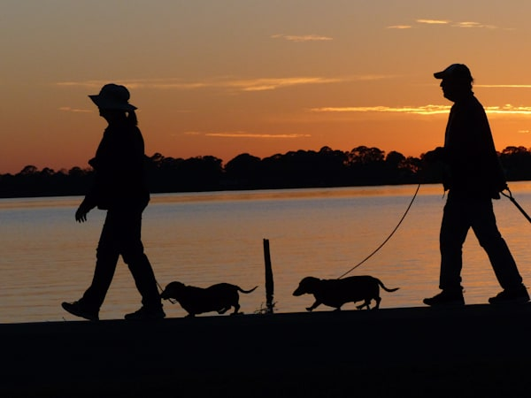 Walking the Dogs | Tom Nolan | Roost Artist