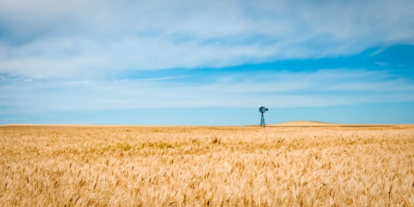 """Windmill and Wheat Panorama "" 