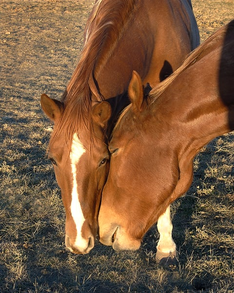 Horses   Jim Parkin Fine Art Photography