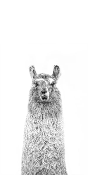 A Little Longer Llama