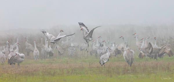 Sandhill Crane Pastoral