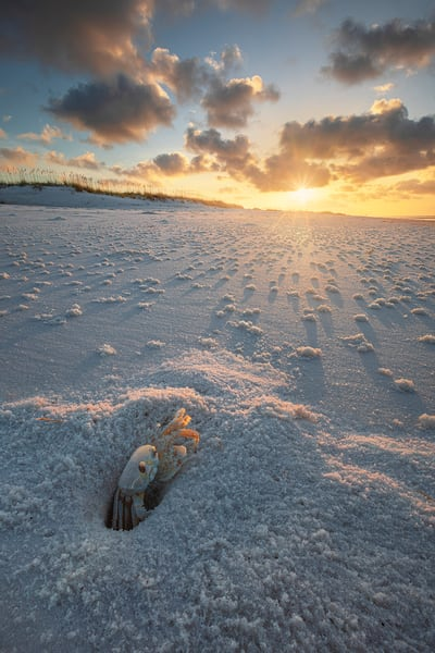 Ghost Crab Sunrise | Pensacola Beach, Florida | Fine Art Landscape Photography on Canvas, Paper, Metal | Photography by Jeff Waldorff