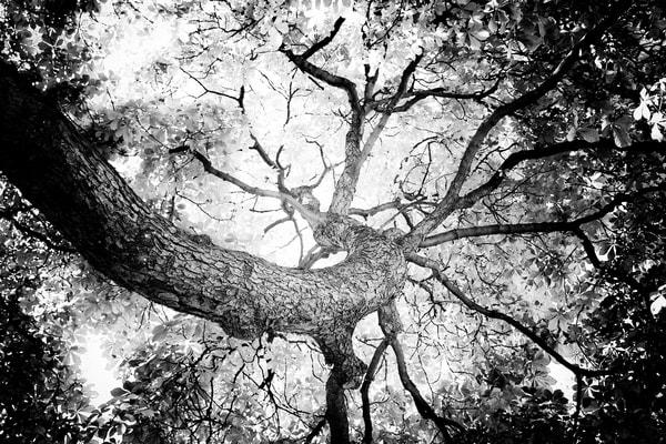 TREE #58