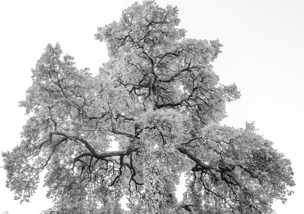 TREE #72