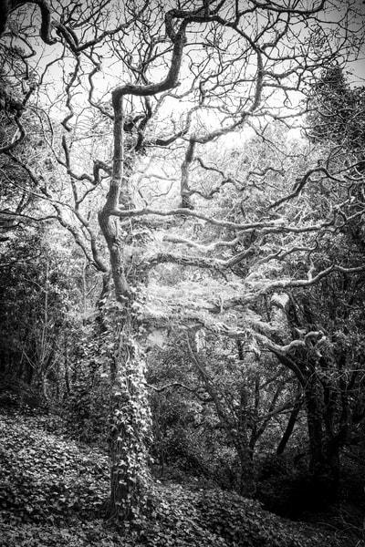 Tree #135
