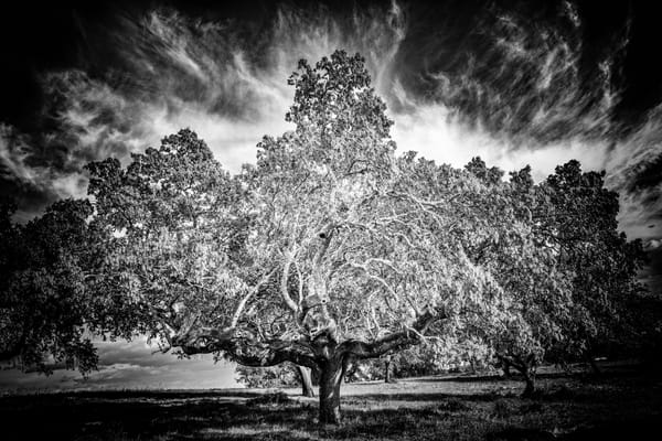 Tree #145