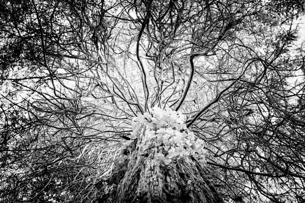 Tree #9: Medusa Photography Art | Roberto Vámos Photography