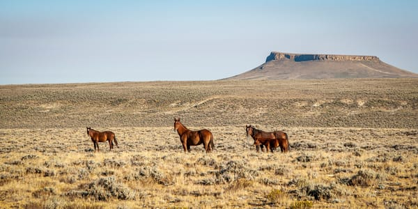 Wyoming's Wild Horses | Jim Parkin Fine Art Photography