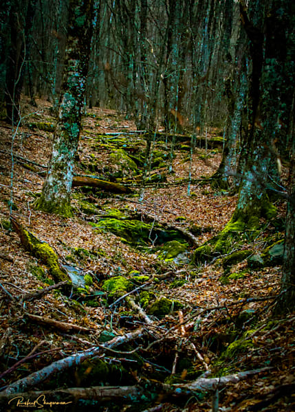 Moss Filled Stream | Shop Prints | Robert Shugarman Photography