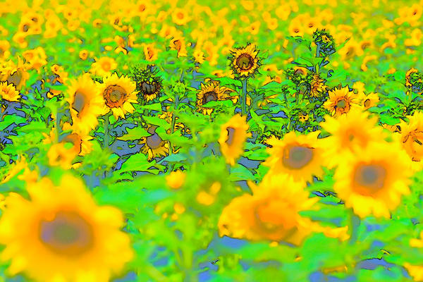 Yellow Blue Green Sunflowers