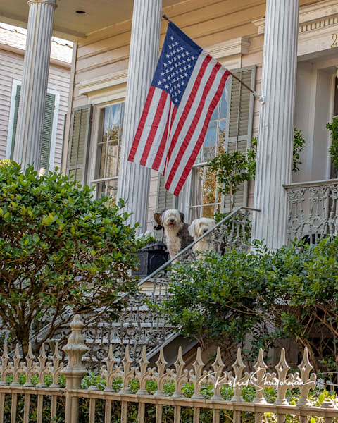Patriotic Sheep Dogs | Shop Prints | Robert Shugarman Photography
