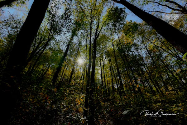 Morning Walk in the Woods | Shop Prints | Robert Shugarman Photography