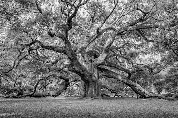 angel-oak-tree-02