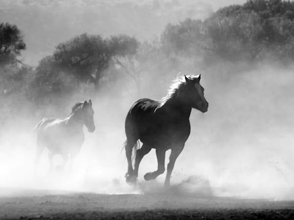 24x18 horses