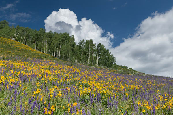 Crested Butte Flower Hill Photography Art | Kirk Fry Photography, LLC
