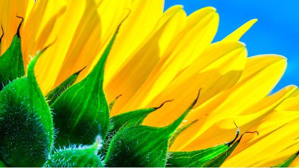 Colors photograph for sale as Fine Art
