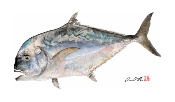 Traditional Gyotaku Paintings | Mirror Trevally by Desmond Thain