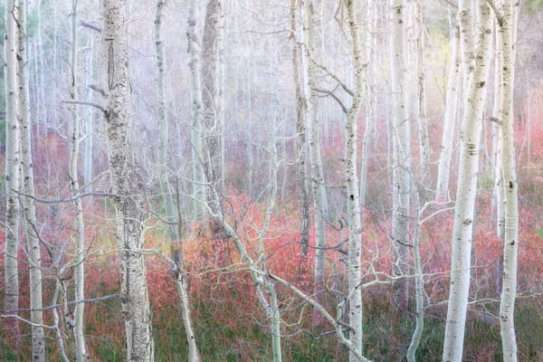 Enchanted Forest archival print by Charlotte Gibb