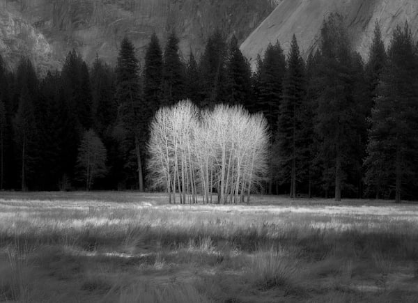 Ahwahnee Meadow Cottonwoods in Yosemite, an Intimate Landscape