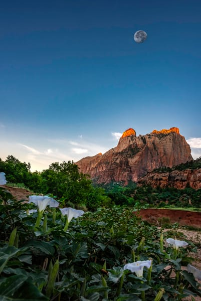 MoonFlowers of Zion