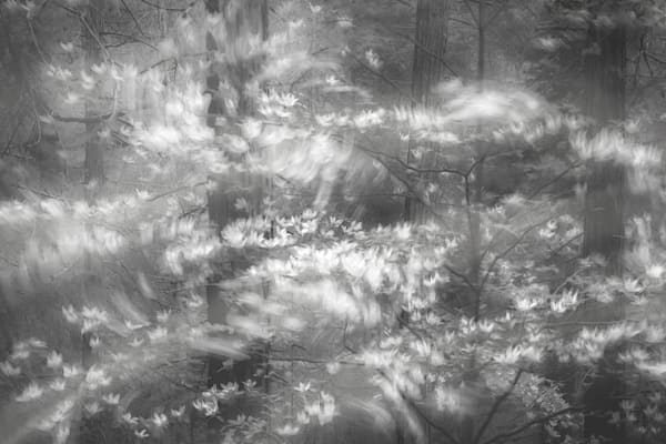 When The Forest Stirs, Award winning B&W Photograh by Charlotte Gibb