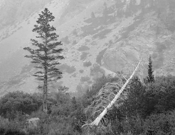 Fallen tree in Sierra Nevada Mountains, Honorable Mention by Charlotte Gibb