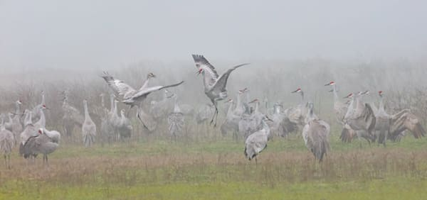 Sandhill Crane Pastoral Award of Excellence by Charlotte Gibb