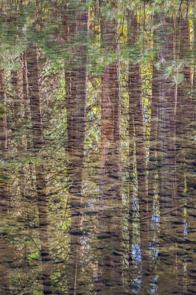 Pines Reflected in Yosemite's Merced River, a fine art print by Charlotte Gibb