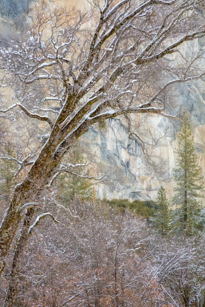 Winter Light Yosemite Intimate Landscape print by Charlotte Gibb