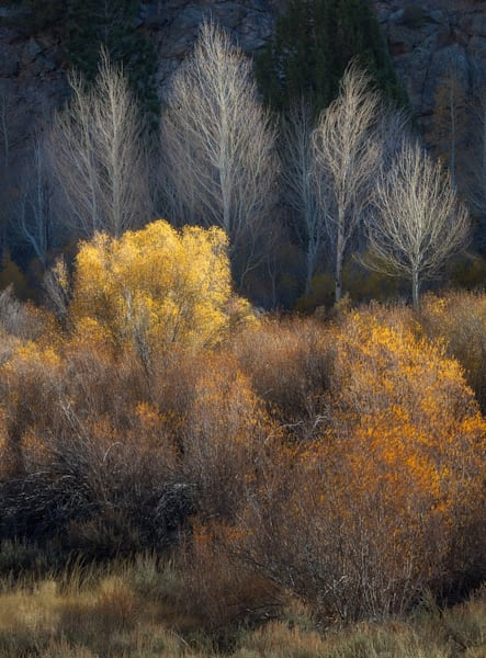 Autumn Aglow Intimate Landscape Eastern Sierra California by Charlotte Gibb