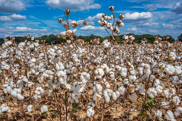 Cotton on High