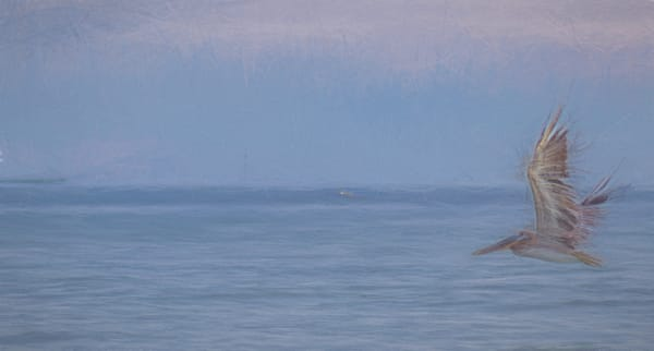 Pelican Over Sea Photography Art | draphotography
