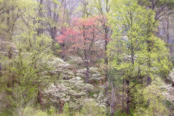 Speaking of Trees, Intimate Landscape in the Great Smoky Mountains National Park
