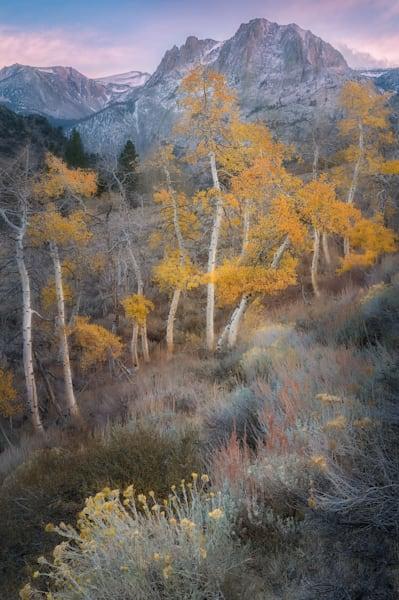 Last Sunset in the Eastern Sierra, California, Aspen Groves