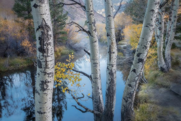 Fine Art Print | Along Rush Creek Sierra Nevada Mountains, California