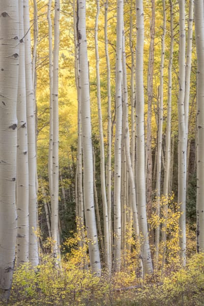 Aspen Happy in Colorado by Charlotte Gibb