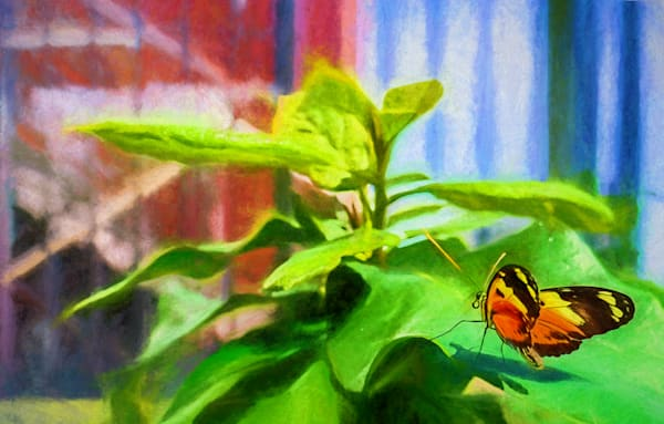 Exploration Butterfly Photography Art | draphotography
