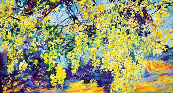 Yellow Shower Tree, Ltd Edition