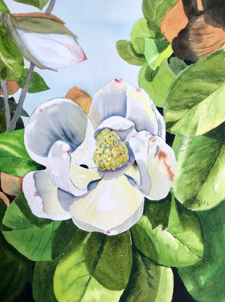 Magnolia 2 Art | Patty Cunningham Art