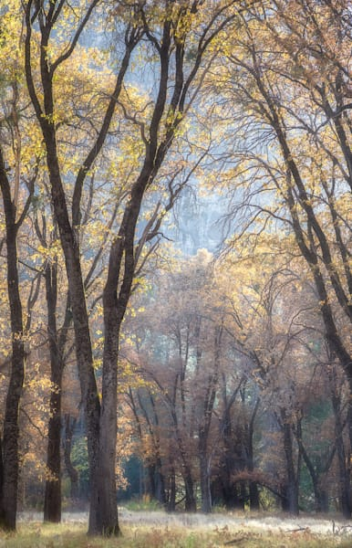 Living Cathedral — Autumn | Yosemite Valley in late Autumn