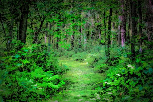 Path to Mirkwood