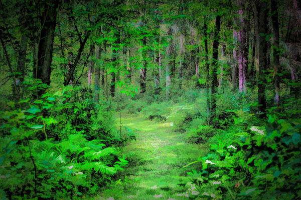 Path To Mirkwood Art | monroepayne