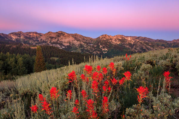 scotts peak dawn wildflowers