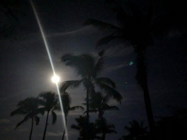 Palms & Moon Ii Photography Art | Brian Ross Photography