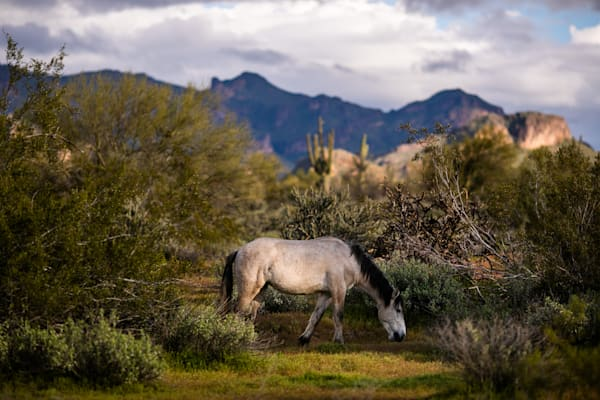 Grazing Photography Art | Mike Olbinski Photography