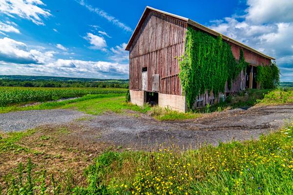Ready for harvest - old farm barn photography prints
