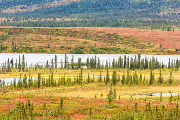 The Susitna River Valley and peak autumn colors and spruce trees along the Denali Highway in Southcentral Alaska. Morning.